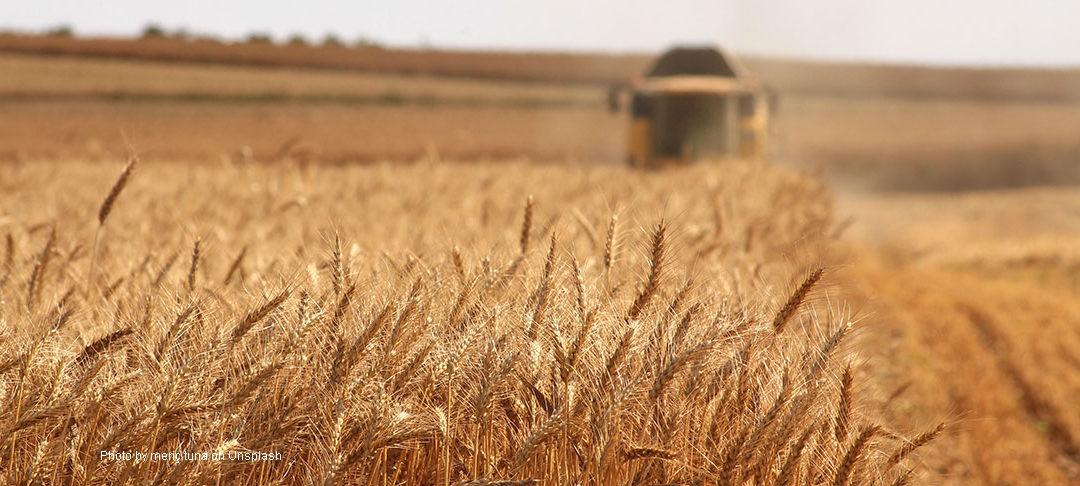 L'agriculture russe après cinq ans de sanctions